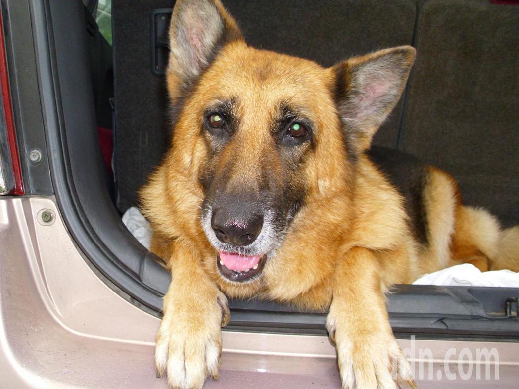 你的狗狗愛坐車嗎?台灣今年底前,有機會出現市場第一張「車內寵物險」意外險保單。記...