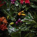 蟬鳴、蜻蜓、葡萄葉 珠寶演繹夏季大自然風情