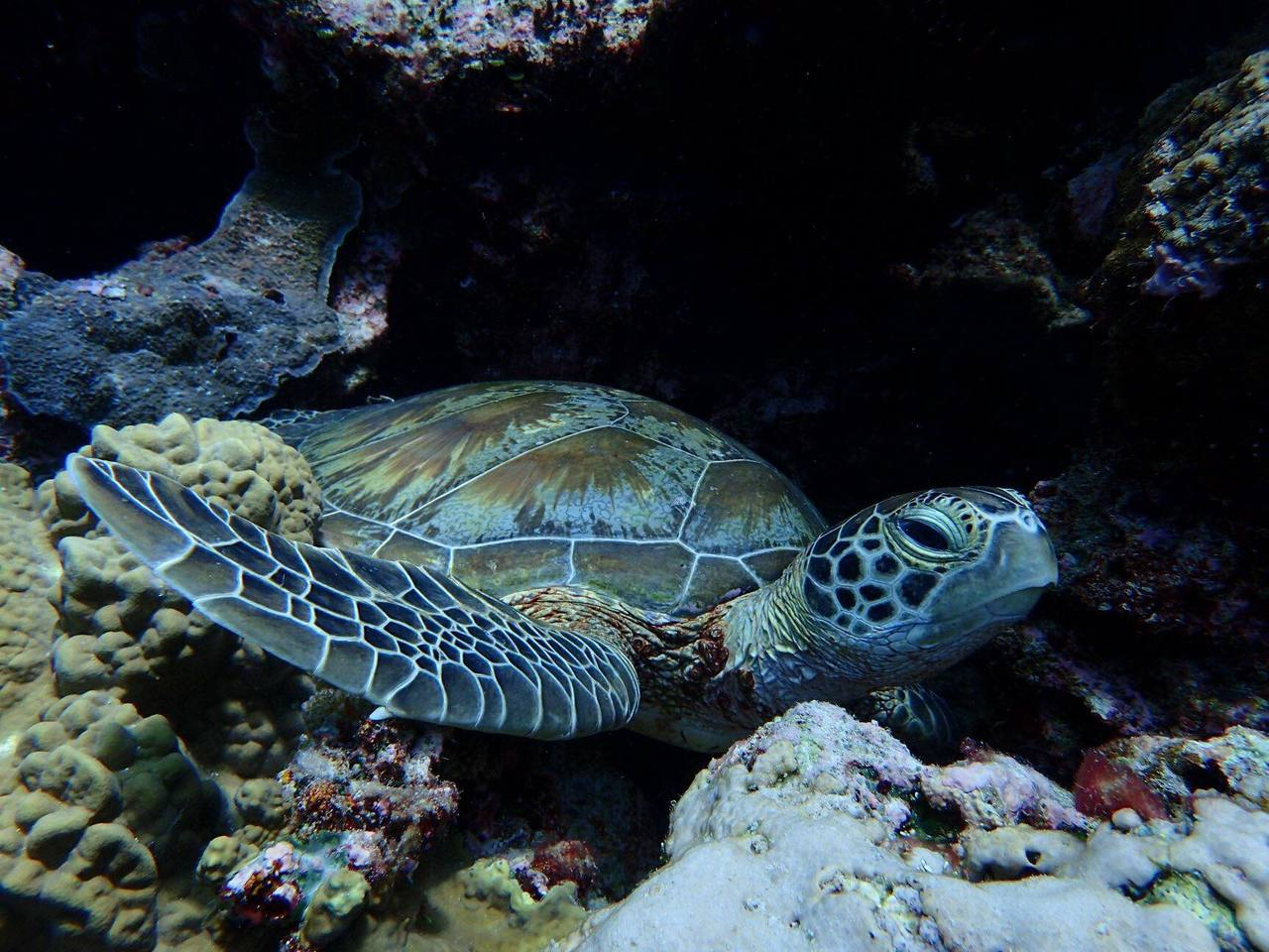 豐富的海底動物,常令帛琉浮潛之旅充滿驚喜。圖/讀者林小姐提供