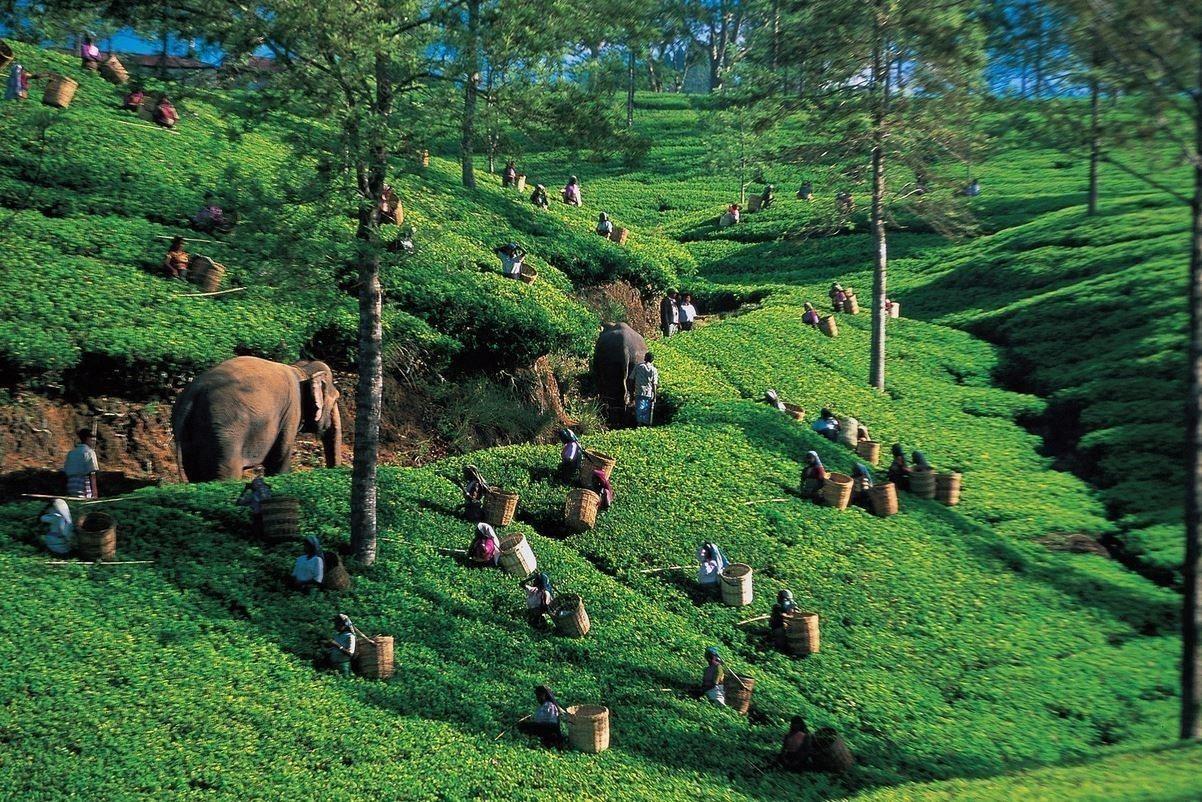 斯里蘭卡 brasildelonge.com