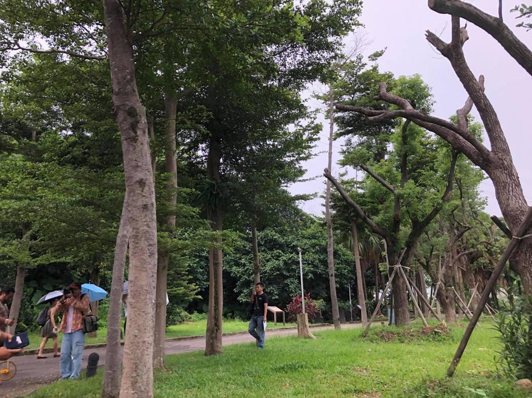 有關都更案涉及百年老榕樹移植問題,台北市文化局昨邀集樹保委員、樹保團體、開發廠商...