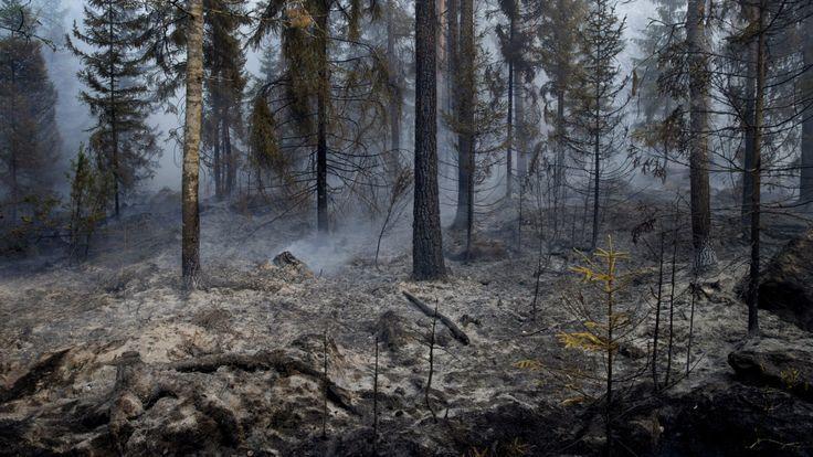 芬蘭的森林在林火中化成焦土。 (翻攝自網路)