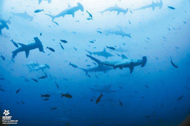 這幅景象應是所有潛水者在潛途中畢生的願望。 圖/詹仁雄、海地玩家提供
