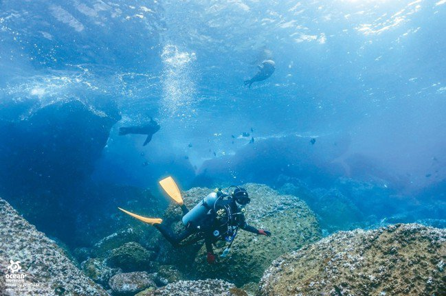 頑皮的海獅會在淺灘跟潛水者嬉戲。 圖/詹仁雄、海地玩家提供