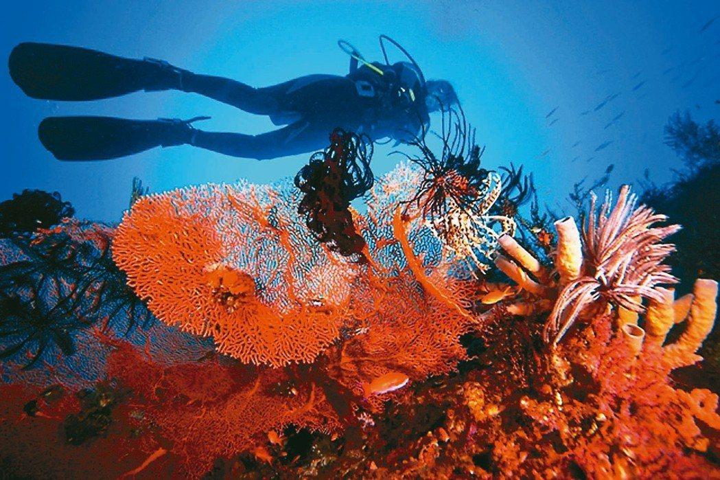 阿麗拉曼吉斯可為潛水客量身訂製行程。 圖/各業者提供