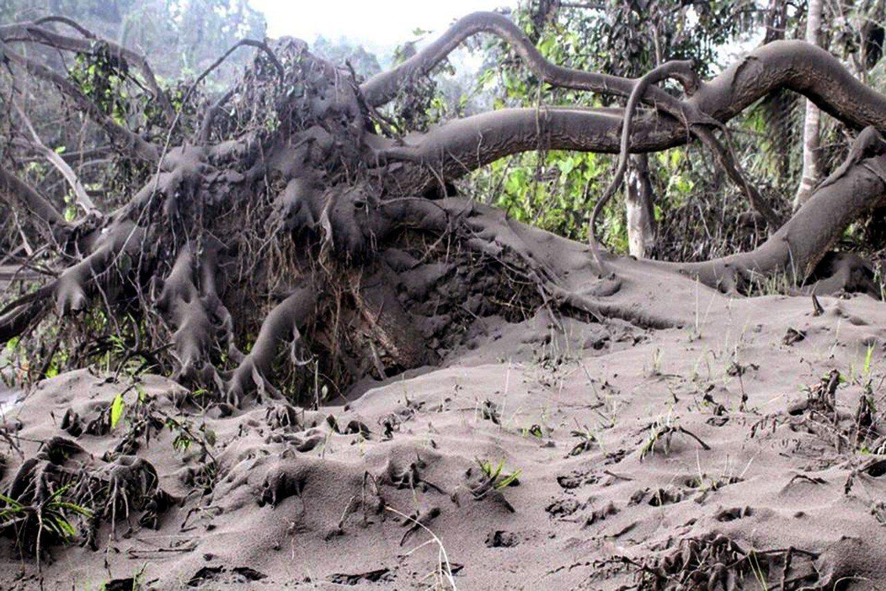 火山灰遍布土地。 歐新社