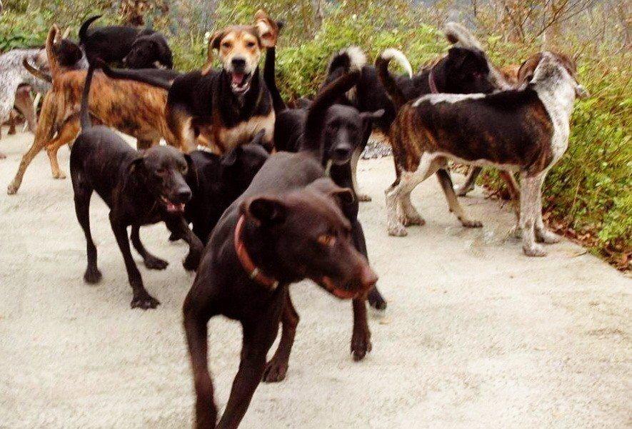 疾管署副署長莊人祥強調,不曾有國人被流浪犬貓咬傷而染狂犬病。 圖/聯合報系資料照...