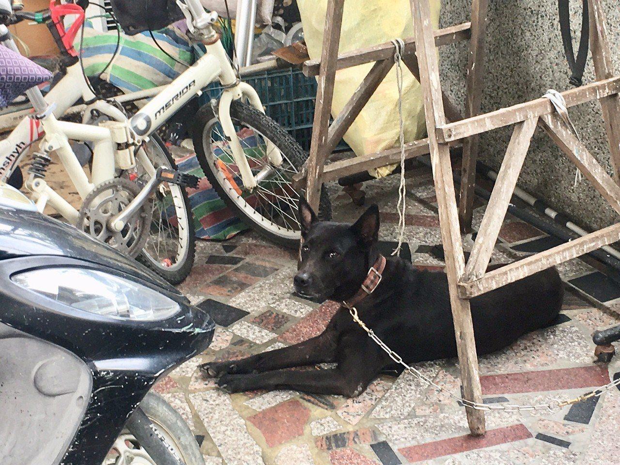 追人的黑狗已經被繫住。記者吳淑玲/攝影