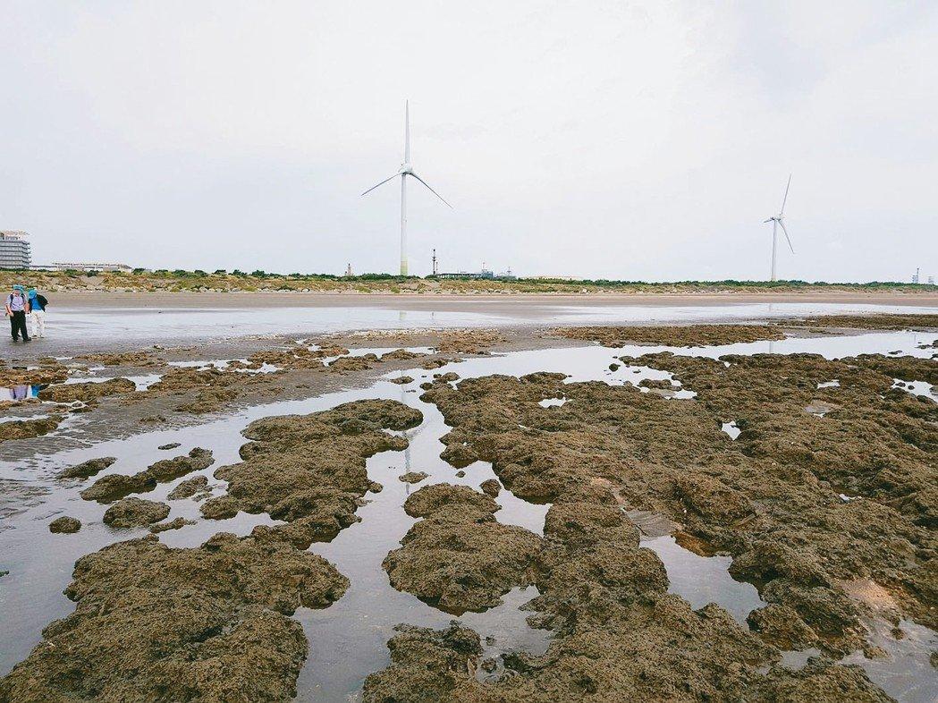 對於桃園觀塘港的藻礁,台灣中油已採原址迴避方案保護。 中油公司 ╱提供