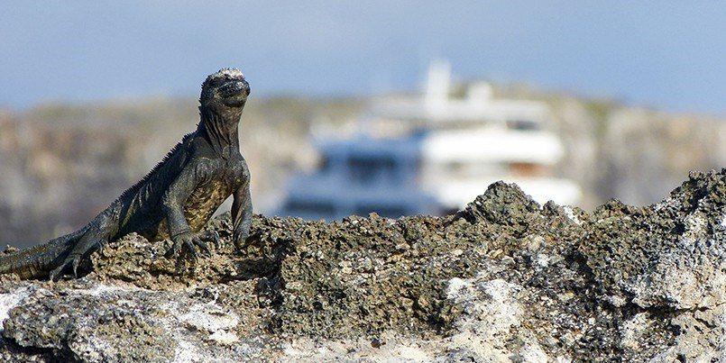 想去一趟加拉巴哥群島,看地球上少有的一片淨土嗎?(Photo Source: w...