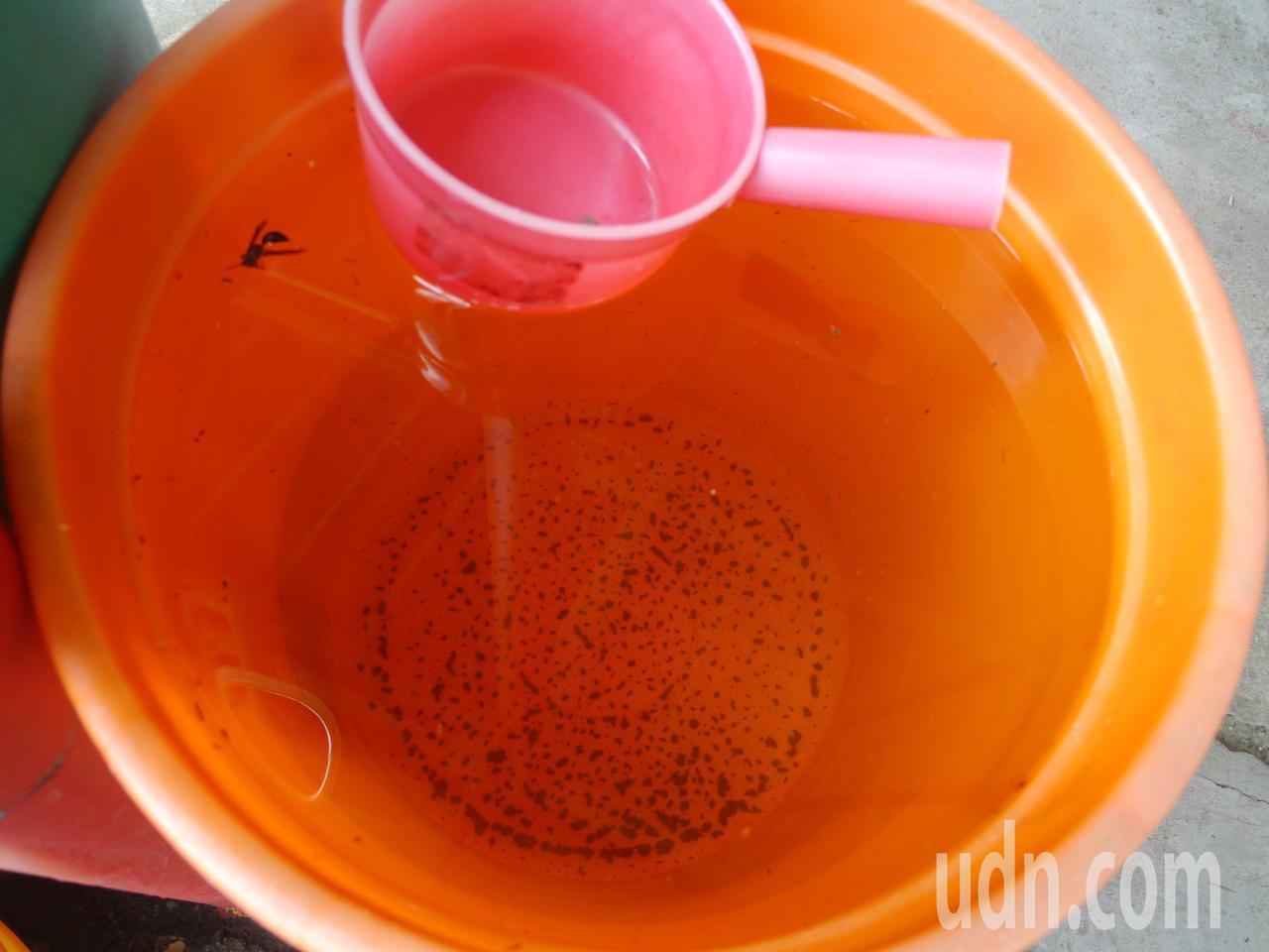 居民家中的水桶收集雨水,水面上漂浮著不明生物。記者徐白櫻/攝影