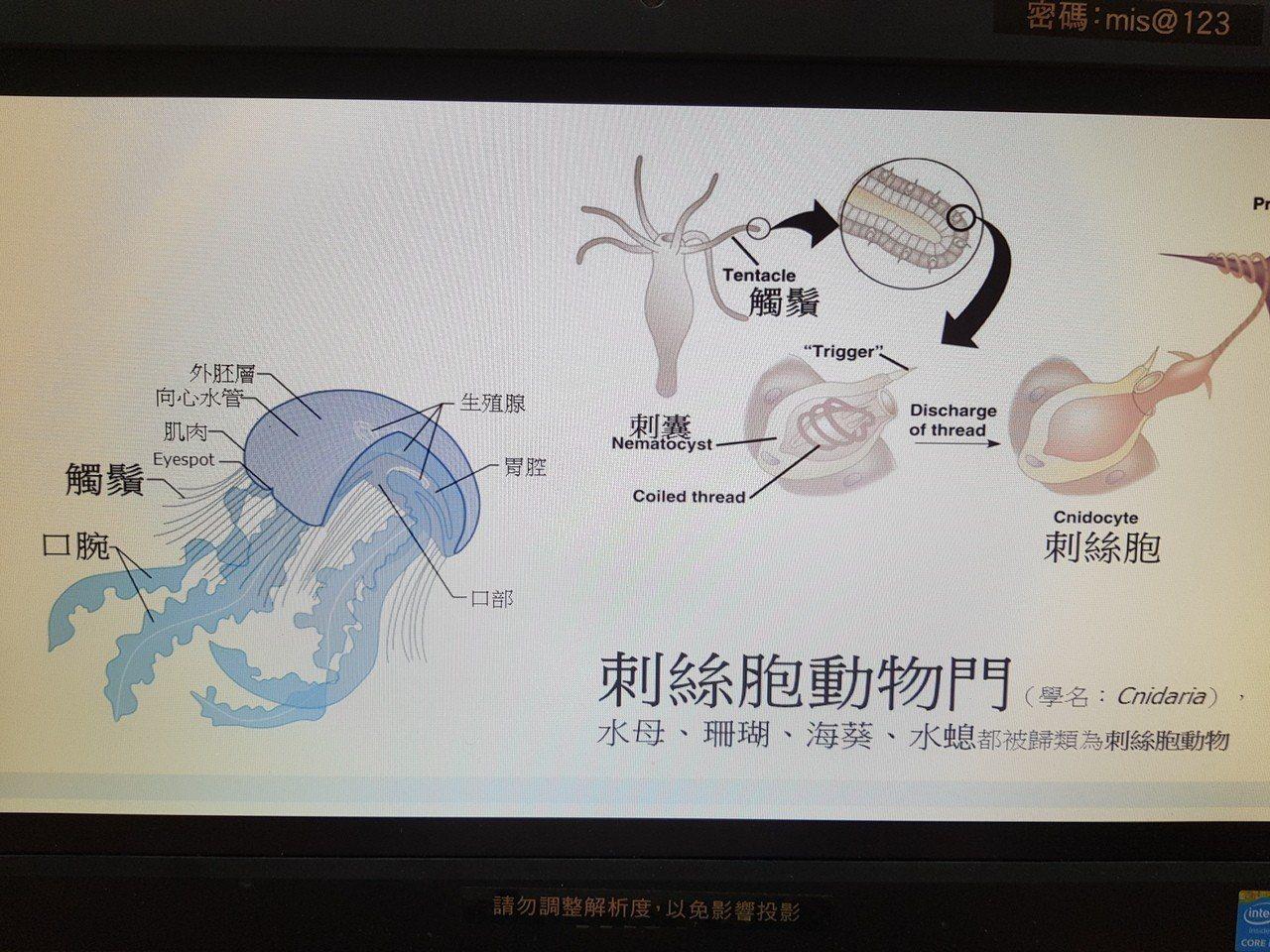成大皮膚科醫師劉承翰提醒民眾 到海邊玩要小心水母 記者修瑞瑩/攝影