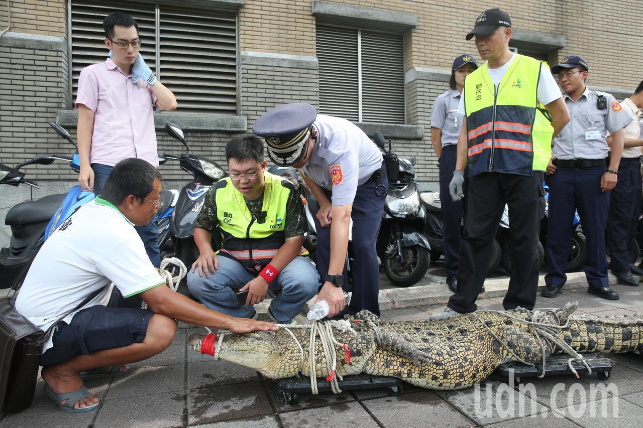 抗議動保法,一位民眾下午帶了一條大鱷魚到行政院陳情,警方怕鱷魚脫水,還不時幫鱷魚...