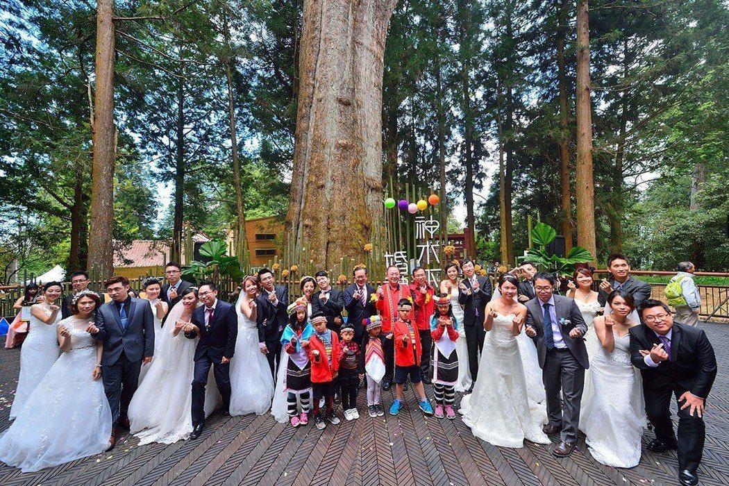 阿里山國家風景區管理處舉辦的神木下婚禮,今年已邁入第12年。 圖/阿管處提供