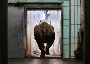 非洲野生動物保育:世界只剩下動物園有什麼不好?