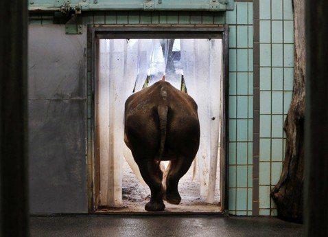 非洲野生動物保育(下):世界只剩下動物園有什麼不好?