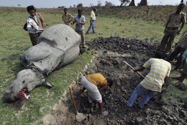 非洲野生動物保育(上):旅遊記者,來去非洲當志工