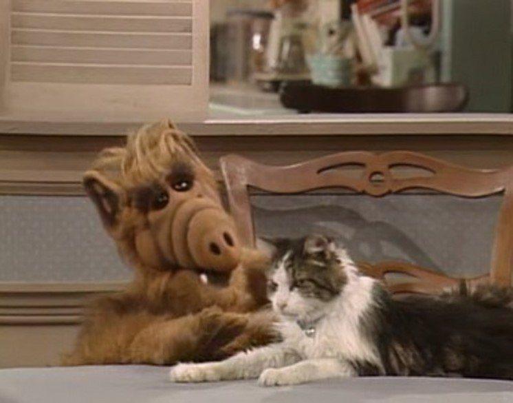 阿福最愛吃貓,在地球上卻只能忍住。圖/摘自imdb