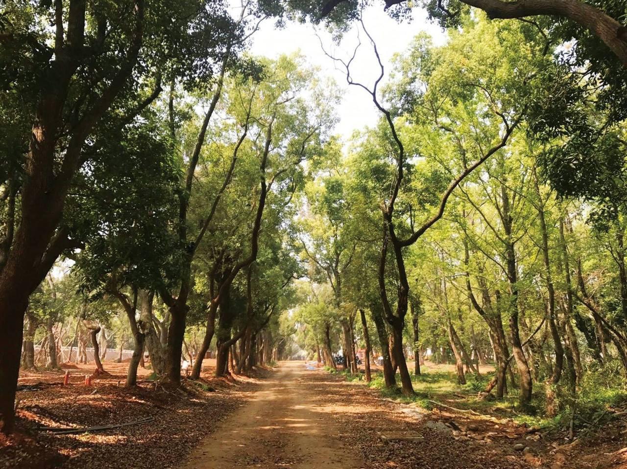 后里是台中花博的主要展區,美麗的森林園區可做為都市公園或苗圃基地。圖/觀旅局提供