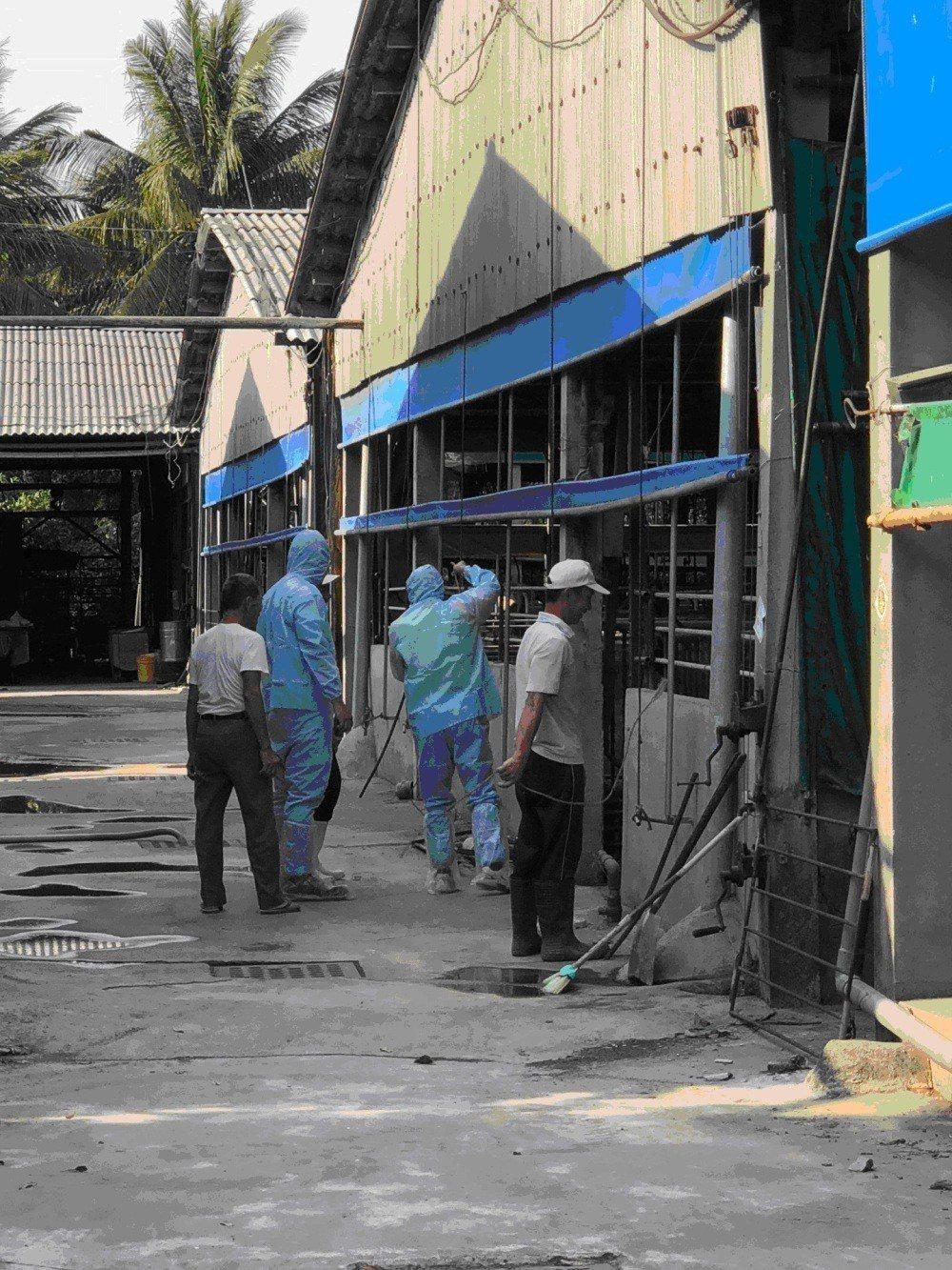 台南市衛生局在歸仁區進行日本腦炎防疫工作。圖/衛生局提供