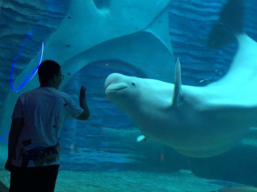 三亞亞特蘭蒂斯酒店其中最受大小朋友歡迎的莫過於「失落的空間」水族館,甚至還有來自...