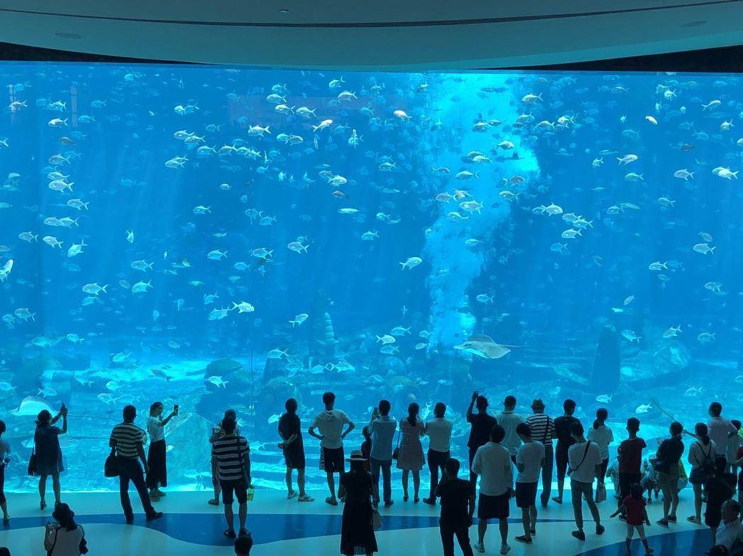三亞亞特蘭蒂斯酒店「失落的空間」水族館,有1.35萬噸天然海水,擁超過280種、...