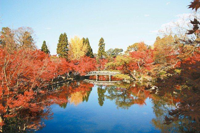 秋天的永觀堂,楓紅如火。 圖/有行旅提供