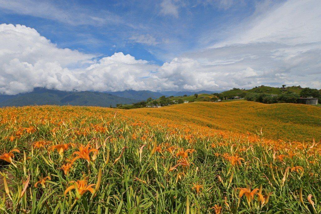 歐洲童話般的六十石山美景,一整片黃澄澄的金針花海開滿山間,吸引遊客絡繹不絕的前來...