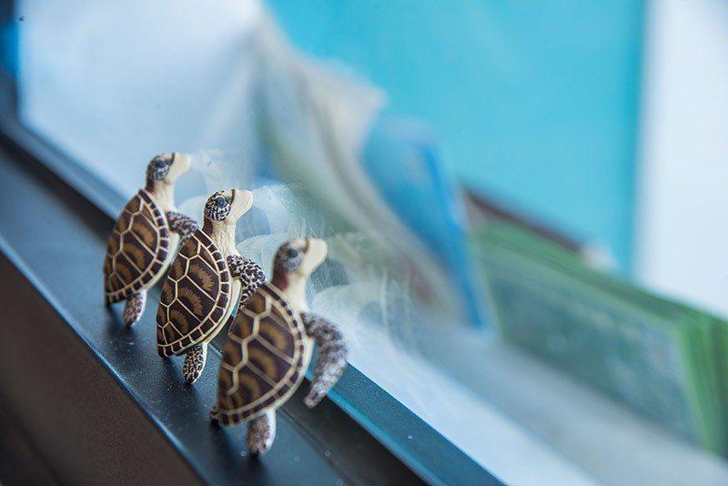 愛護海洋與海龜們一起快樂的生活 攝影/行遍天下