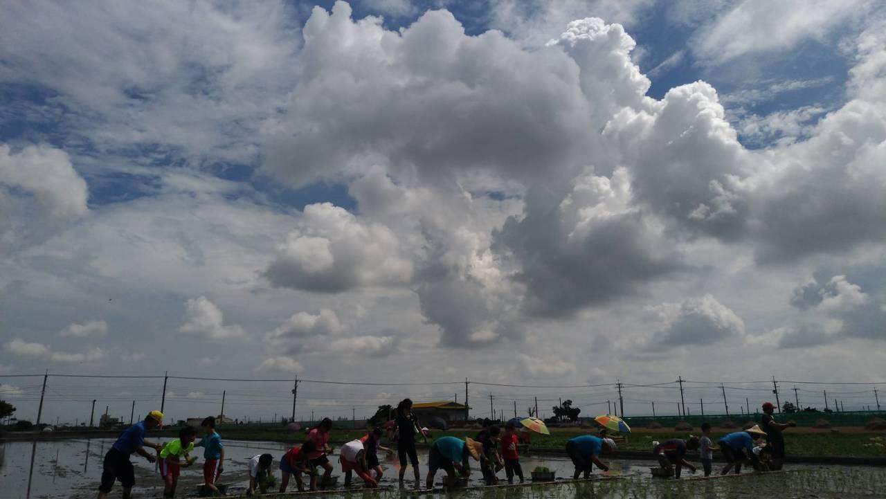 二期稻作開始,田野間不時看到秧苗挺立,西螺鎮農會今天舉辦「活力米香田園遊」,小朋...