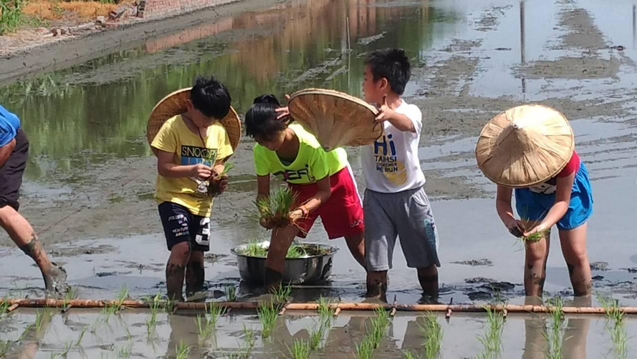 「3指抓著秧苗,深淺整齊一致」孩子們雙腳踏入田中,泥巴淹至小腿,一步一步顯得困難...