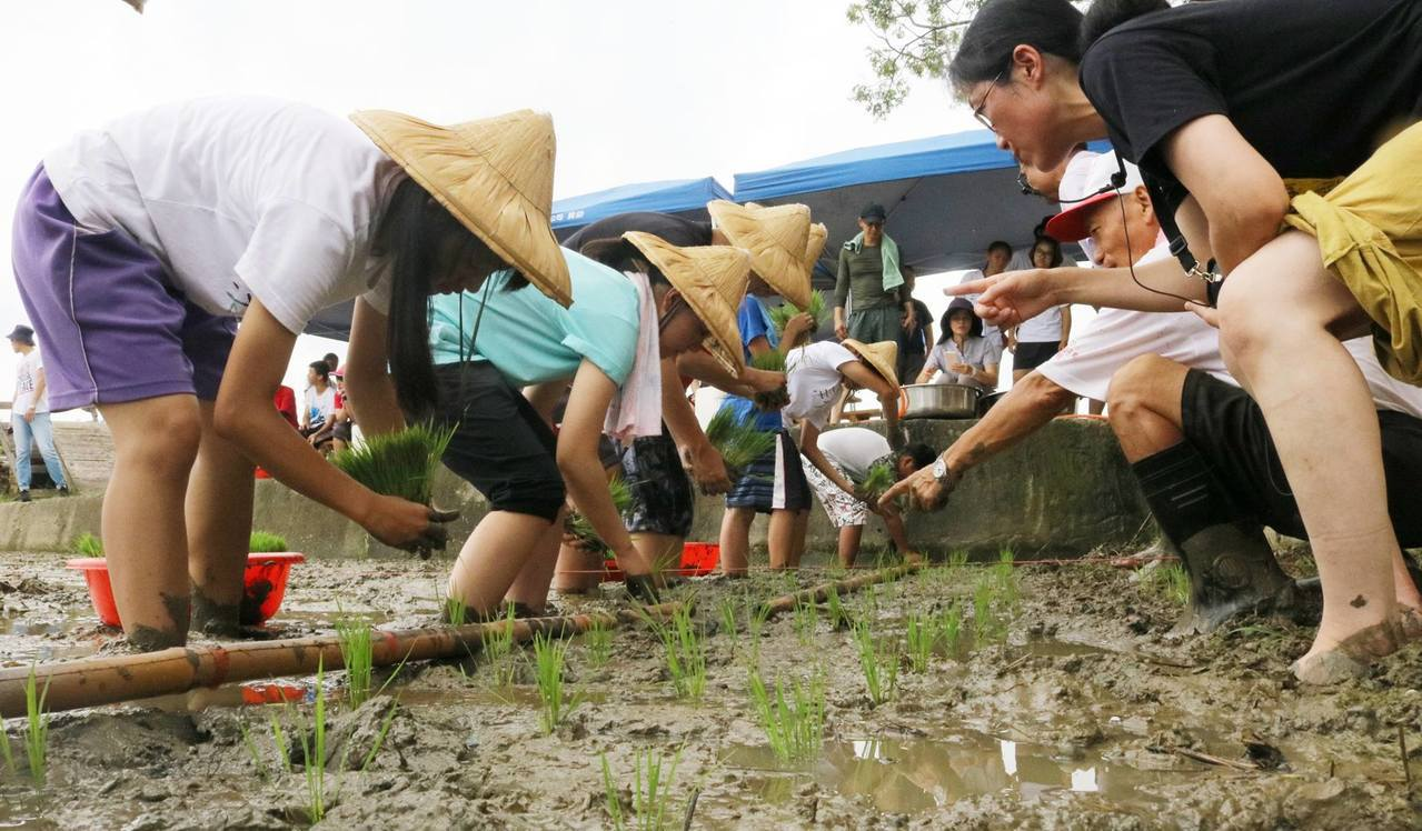 日本「飛驒譽酒米」在新港落地生根。圖/新港文教基金提供