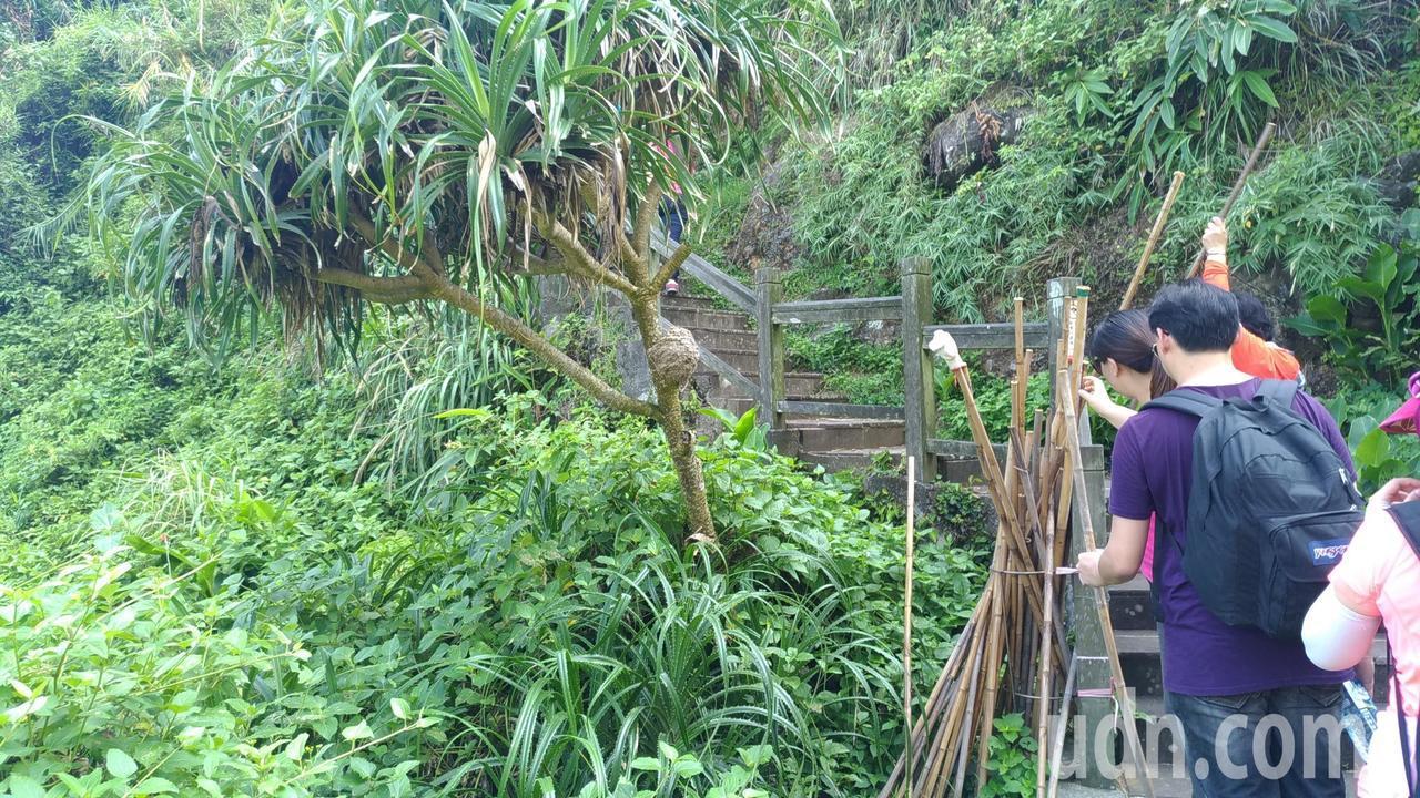 龜山島401高地登山口,提供竹竿,可當登山杖使用。記者楊德宜/攝影