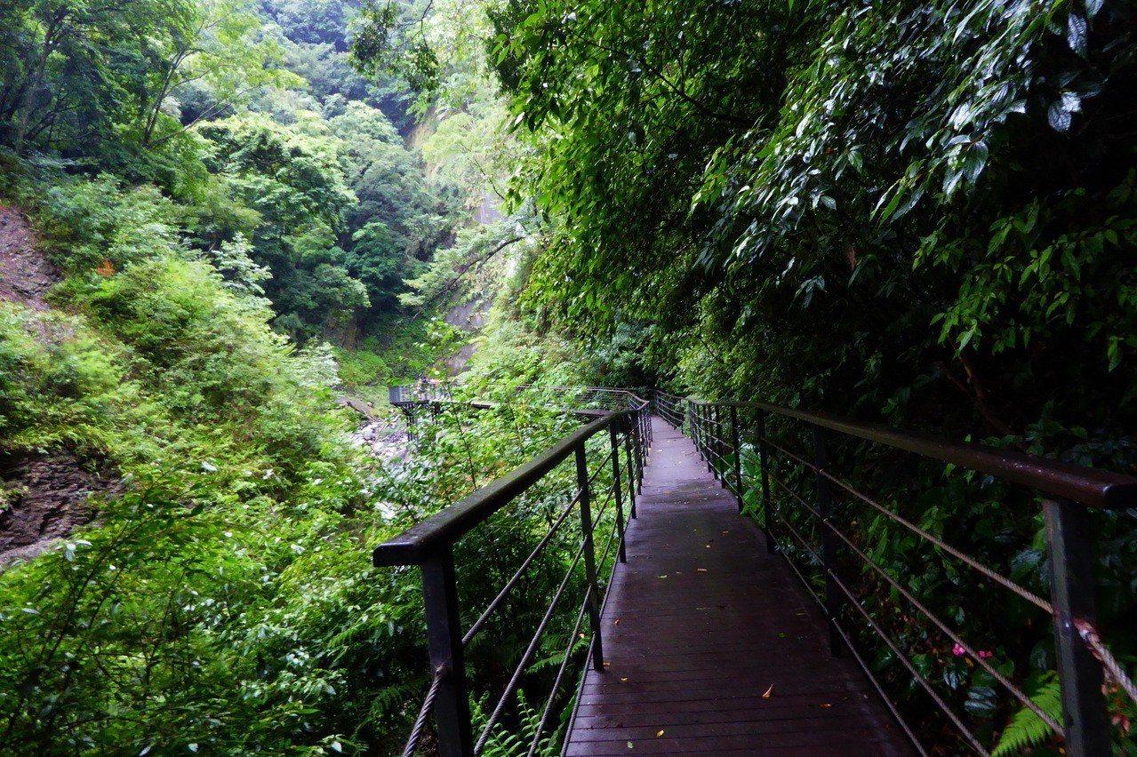 奧萬大瀑布區步道之前因颱風受損,今天重新開放,不少遊客上山避暑,大口呼吸享受森林...