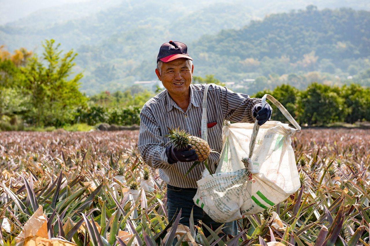 屏東縣鳳梨產量佔全國三分之一,果農今年飽受量大價跌之苦,縣府特別為主要產品的鳳梨...