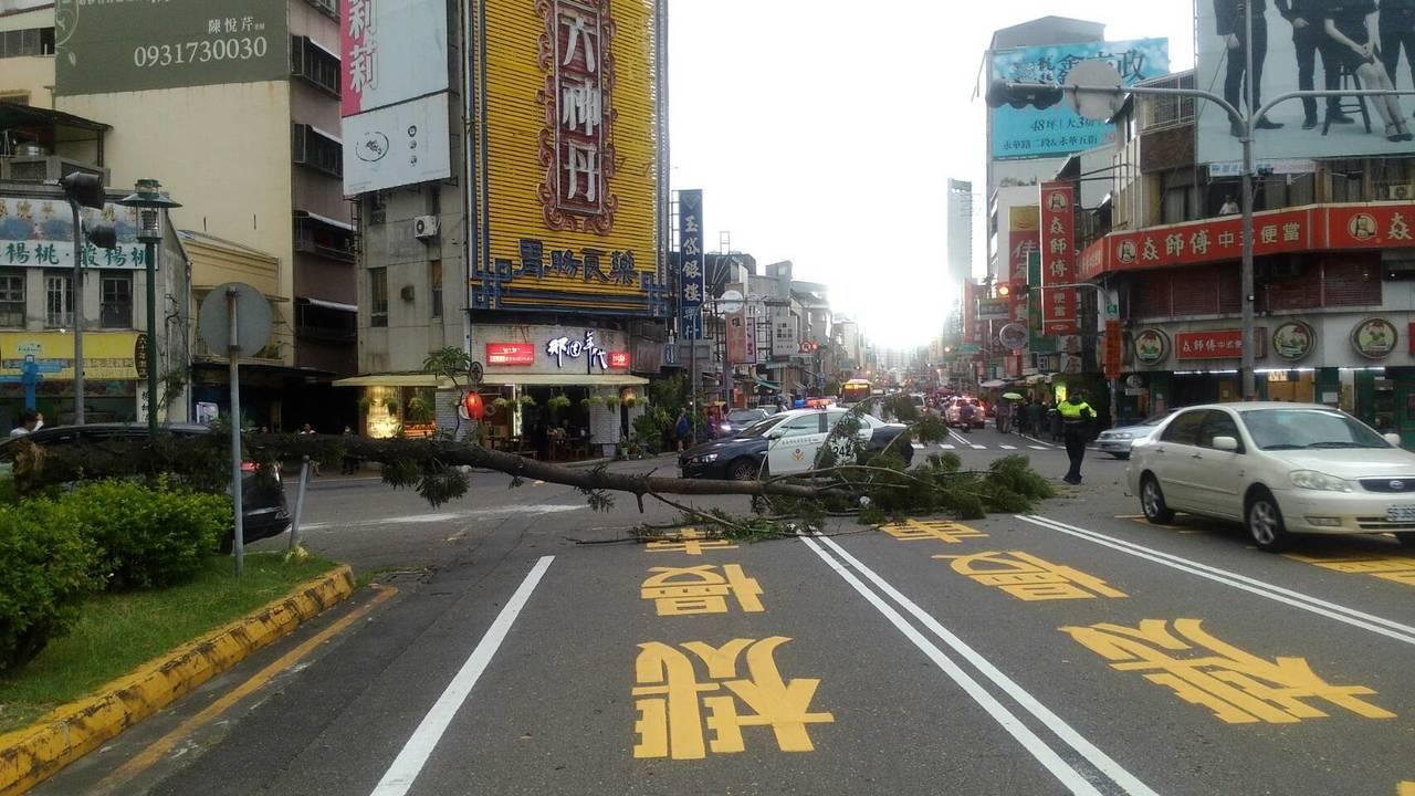 台南市中西區民族路上路樹下午倒塌,橫阻路面,影響交通。記者邵心杰/翻攝