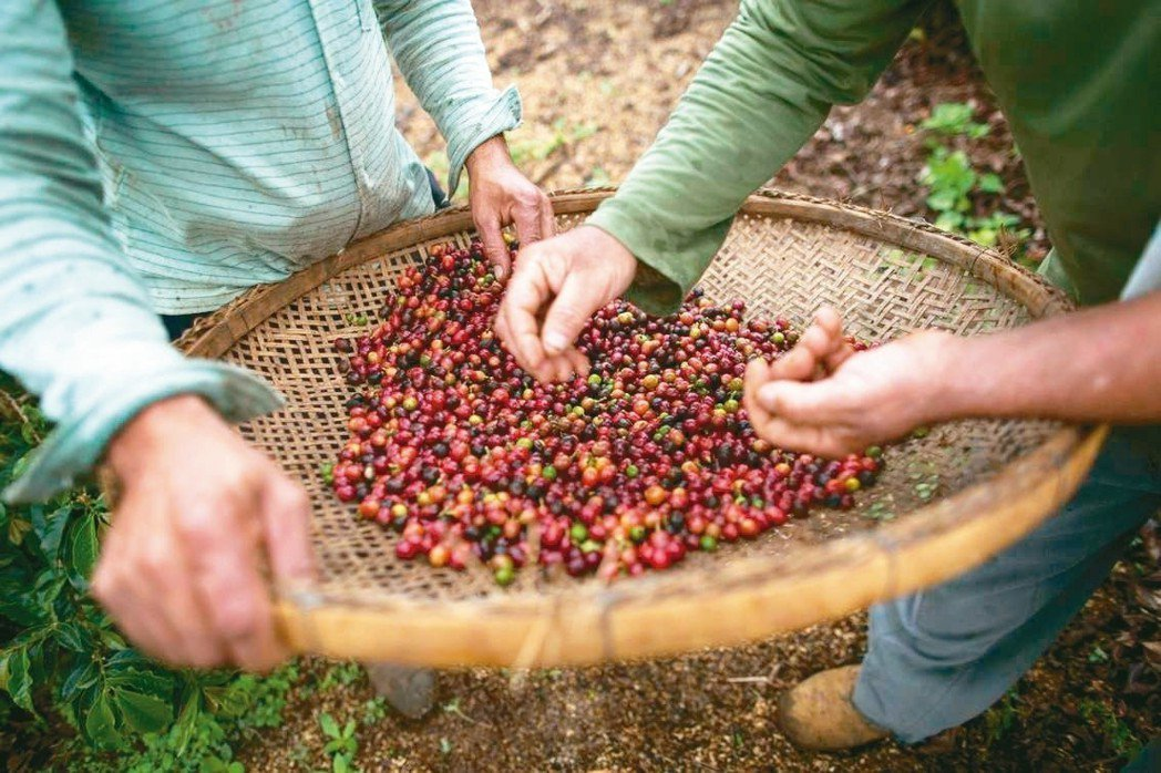 受阿拉比卡咖啡豆生產大國巴西天候乾旱、以及巴西里爾匯率波動的影響,阿拉比卡咖啡豆...
