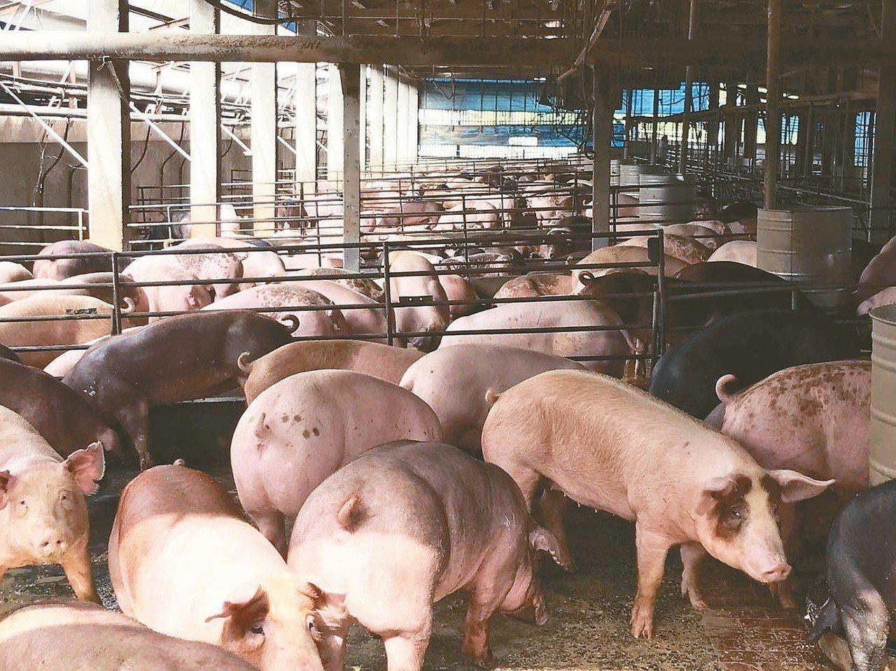 中國大陸瀋陽地區傳出非洲豬瘟疫情,農委會副主委黃金城說明台灣已加強邊境管制及防疫...