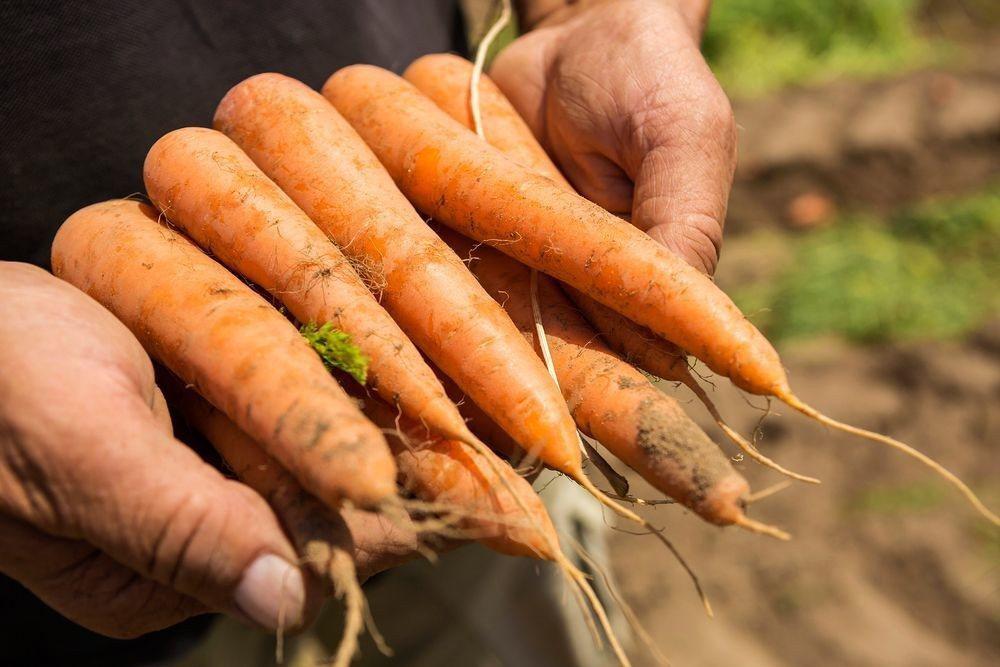 此次交易代表巴斯夫進入種子業務,包括大豆、油菜、棉花和蔬菜。