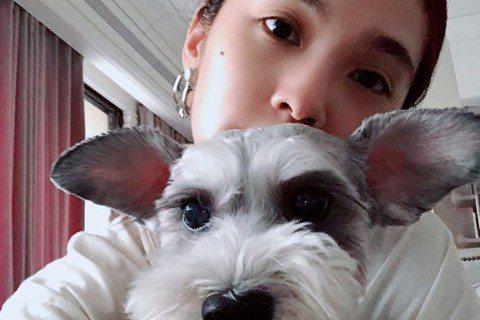 楊丞琳養了13年的愛犬Yumi日前被診斷出有肥大細胞瘤,且是屬於惡性,經過手術後癌細胞沒能完全清除乾靜,讓她忍不住哭喊「我的世界要崩塌了」,還好這幾天Yumi的狀況很不錯,讓她稍微鬆口氣,還特地感謝...