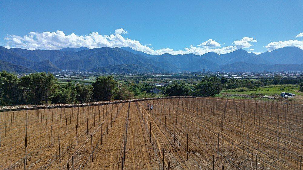 在埔里海拔480公尺、中央山脈腳下佔地4.6公頃的埔里葡萄莊園。與來自納帕谷的專...