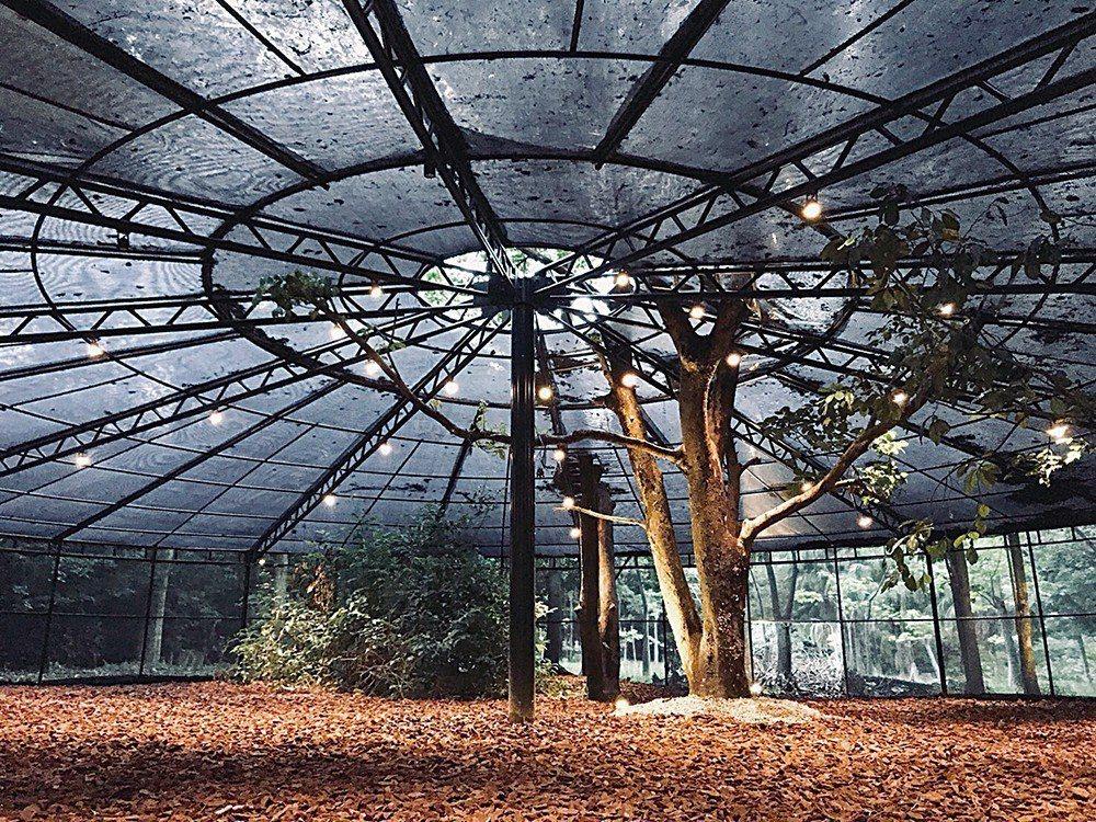 原本作為園區裡育植南瓜的巨型棚架,經過困難度超高的遷移工程,成為與5棵樹木共處的...