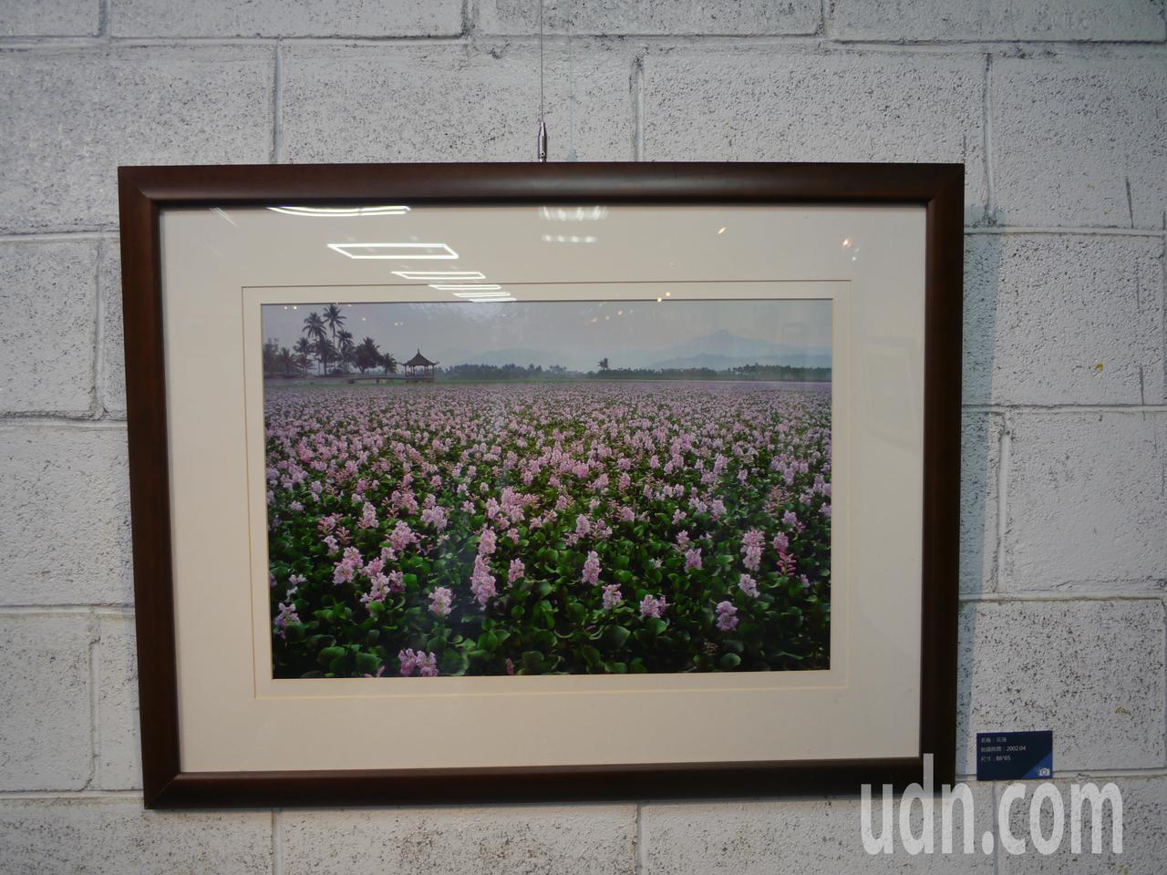 展出作品,布袋蓮布滿美濃湖湖面。記者徐白櫻/攝影