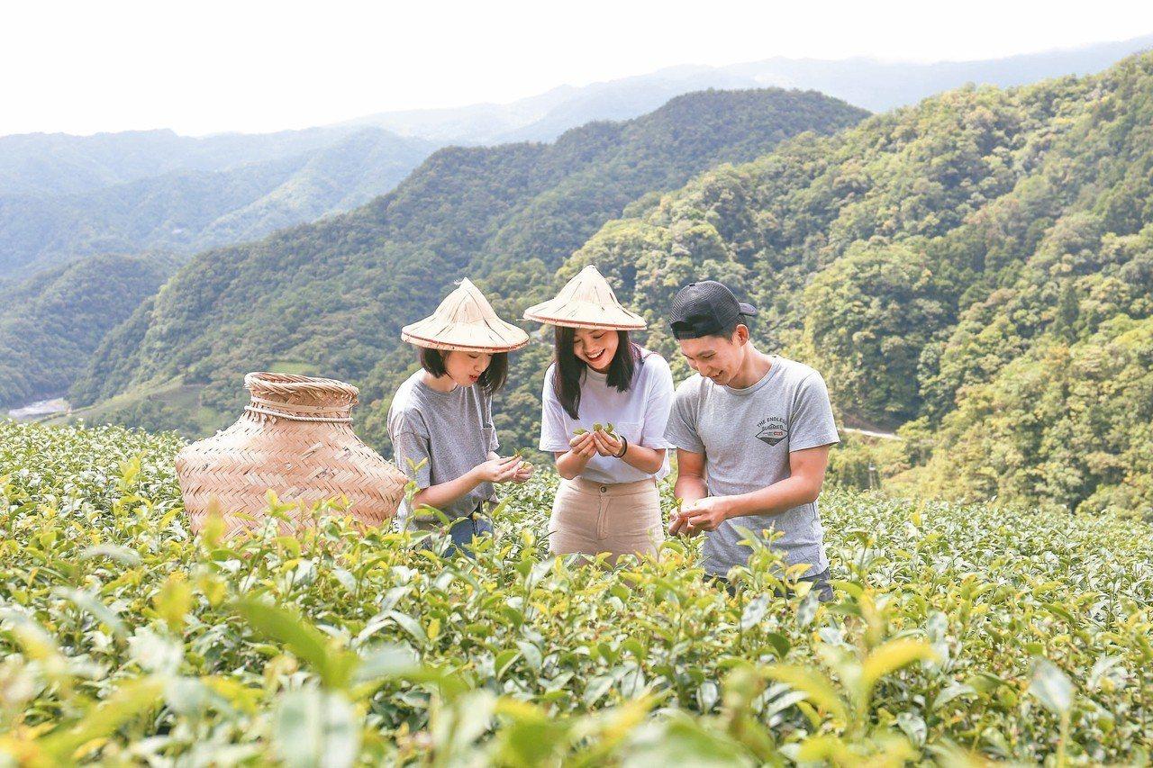 新北市觀光旅遊局推出「小包旅行」,3條路線共25種限量遊程,圖為坪林採茶體驗。 ...