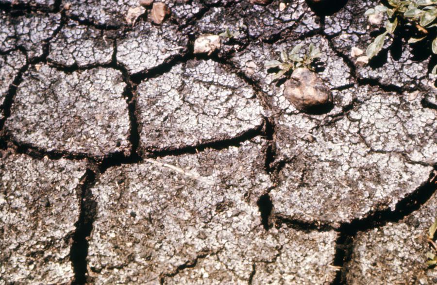 土壤扮演生態系統中相當重要角色。 台灣醒報(擷自Flicker)