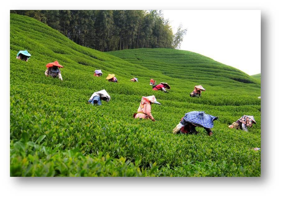 南投縣政府協助返鄉青農,將提供尋覓農地的服務。記者張家樂/攝影