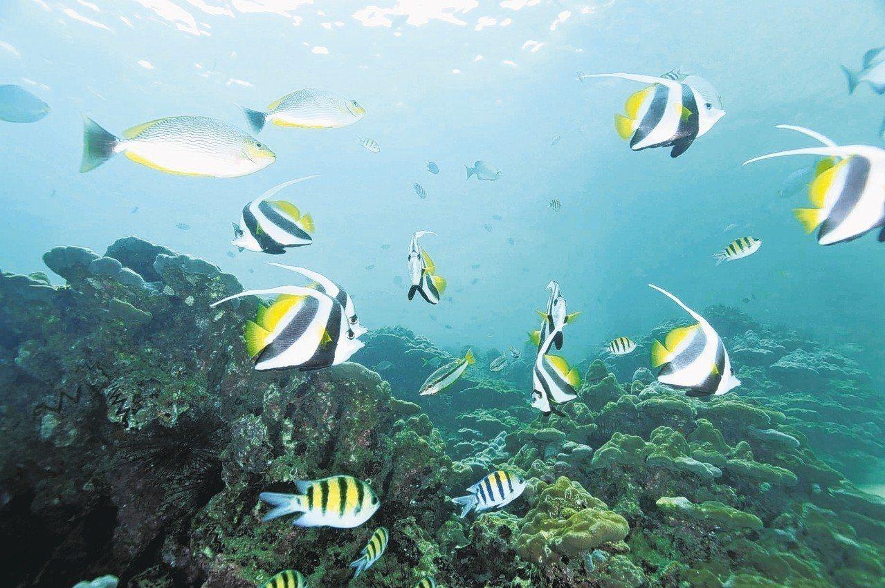 芭雅島海洋公園是蘭卡威第一座海洋公園。 圖/馬來西亞觀光局提供