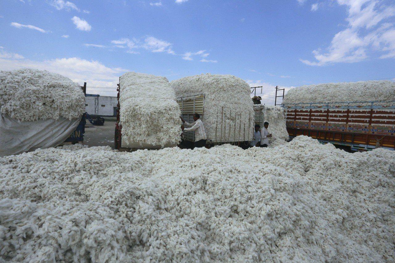 印度為全世界最大的棉花生產國。 歐新社