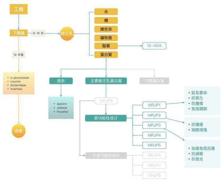 蜂王乳蛋白質的種類與可能的作用。(Ref. 3) 圖片提供/MedPartner...