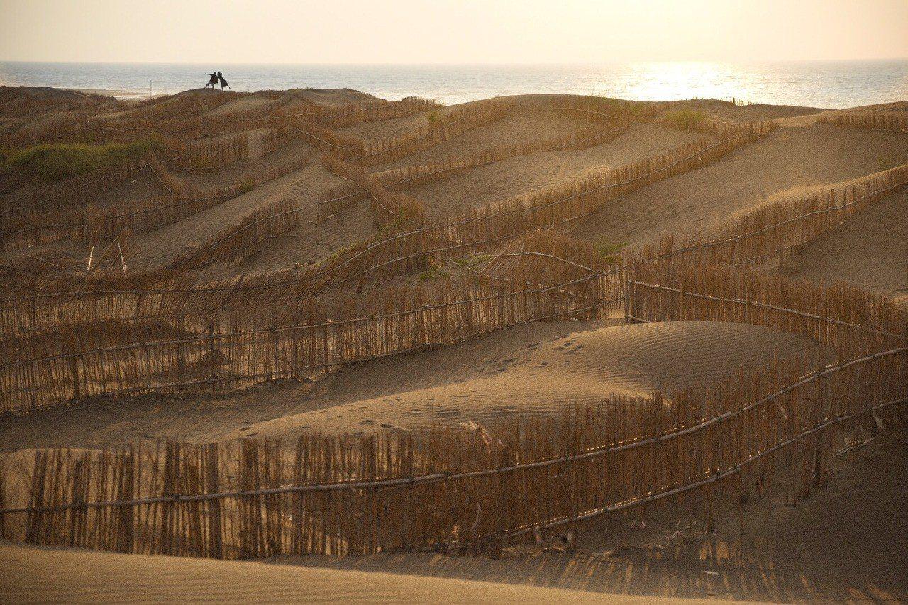 砂丘上的欄沙竹欄,經由小林賢佐之手,更有一番風味。攝影/小林賢佐 提供